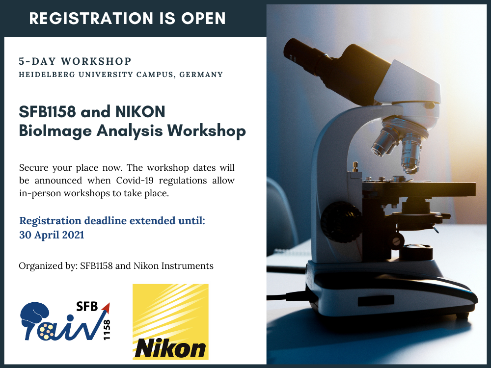 BioImage Analysis Workshop